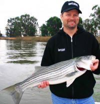 Striped-Bass-Napa-River-Wombat-Charters-500.jpg
